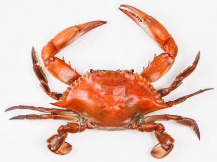 crab-interstitial_0